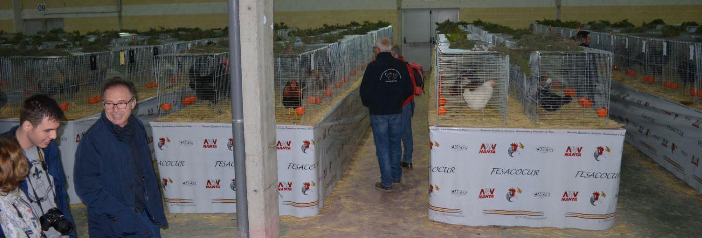 AGAMUR asiste al XIV Concurso Nacional de Avicultura y Colombicultura de Raza, celebrado en Caravaca de la Cruz